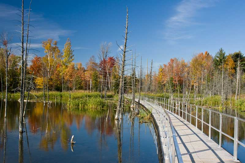 Floating Trail - Bear Creek Wetlands